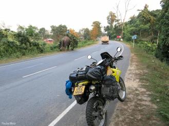Elephant power